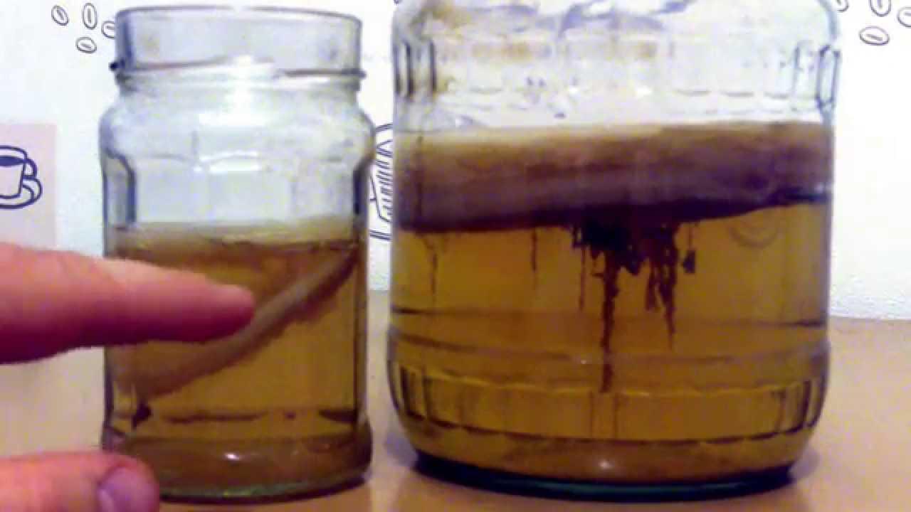 Как ухаживать за чайным грибом, инструкция и правила содержания. Сколько живет комбуча, важность соблюдения чистоты при уходе, когда и как нужно сливать напиток. Частые ошибки в содержании гриба.