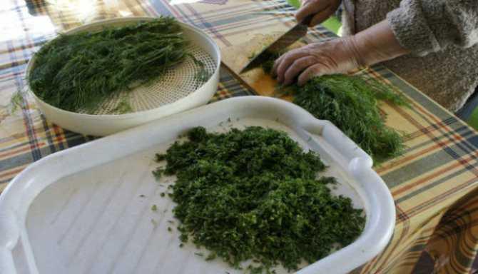 Соленая зелень: 13 рецептов заготовок на зиму » сусеки
