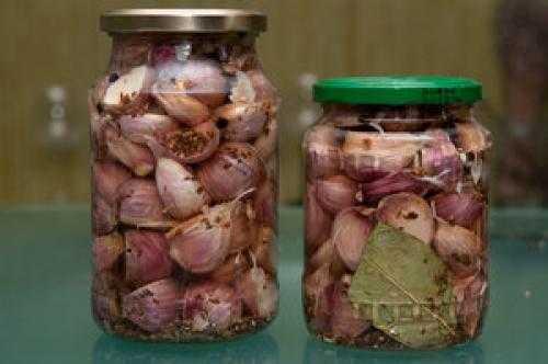 Как мариновать моховики в домашних условиях на зиму: рецепты