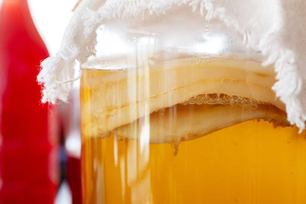 Чайный гриб: уход, полезные свойства и противопоказания
