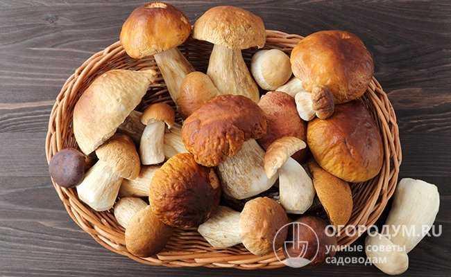 Как хранить соленые грибы после засолки – способы и сроки