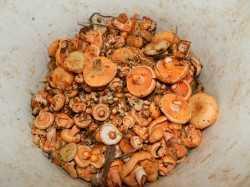 Как засолить рыжики: лучшие рецепты соленых рыжиков на зиму