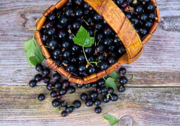 Как заморозить черную смородину на зиму в морозилке правильно, способы заготовки замороженных ягод с сахаром, сиропом и без