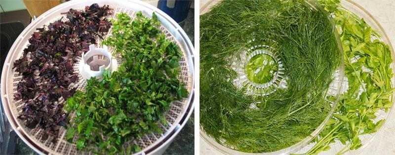 Как сушить шиповник в домашних условиях: в сушилке, аэрогриле, микроволновке, на открытом воздухе. Заготовка лепестков, корней растения.