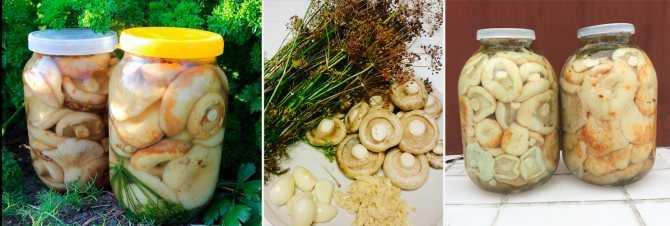 Рецепт маринования черных груздей: маринад для грибов в банках, с уксусом на 1 литр воды