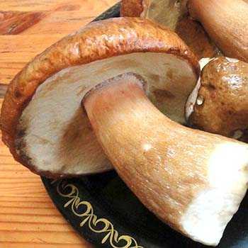 Как посолить грибы волнушки отварные. как солить волнушки на зиму в банках   дачная жизнь