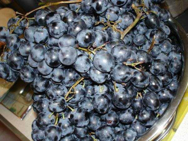 Получится ли вино из яблочного жмыха? рецепт напитка и полезные советы