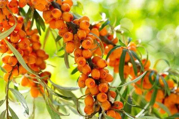 Сколько витаминов в варенье и какие ягоды теряют их при заморозке // нтв.ru