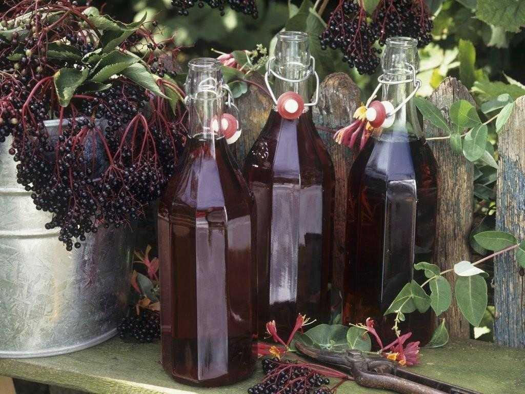 Вино из черемухи в домашних условиях: рецепты приготовления + фото, видео.
