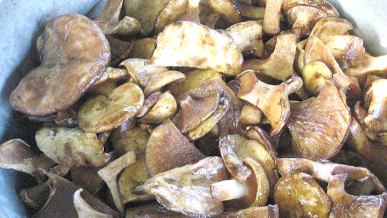 Как солить грибы бычки в банках: солим валуи горячим и холодным способом » сусеки