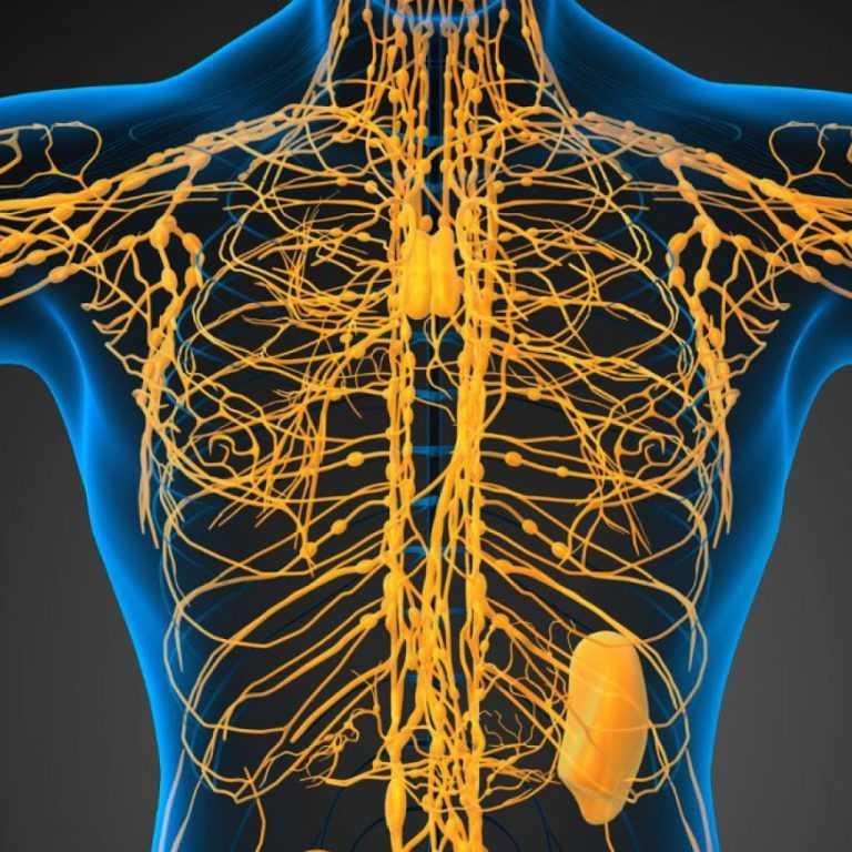 Вред имбиря для организма   компетентно о здоровье на ilive