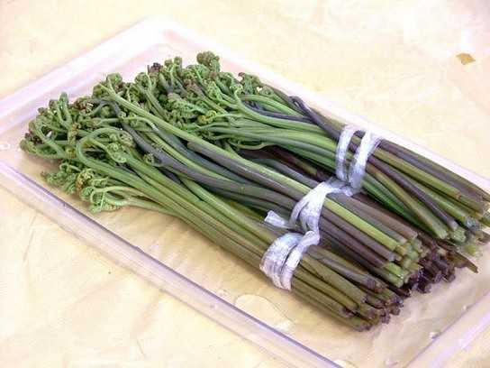 Заготовка зелени на зиму в домашних условиях: лучшие рецепты