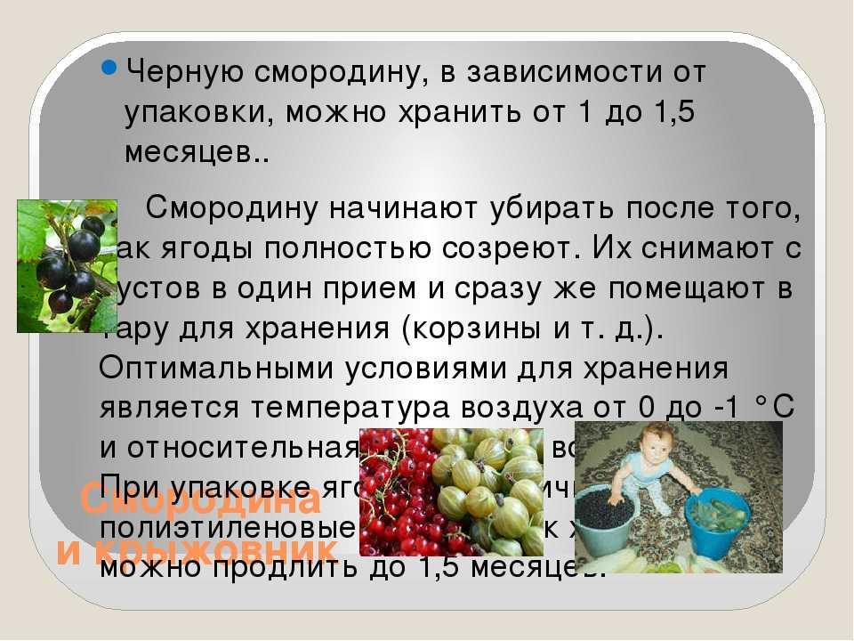 Приготовление компота из шелковицы. компот из шелковицы без стерилизации