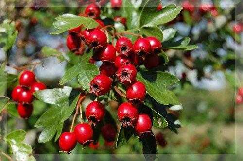Как сушить фрукты и ягоды в домашних условиях