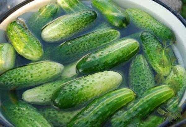 Малосольные огурцы быстрого приготовления – 7 рецептов хрустящих огурчиков