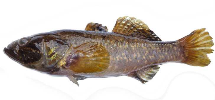 Секреты маринования рыбы перед копчением
