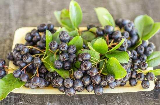 Черноплодная рябина, заготовки на зиму: варенье, компот из черноплодки (лучшие рецепты с фото)