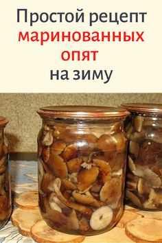 Как мариновать грибы вешенки в домашних условиях на зиму (+24 фото)?