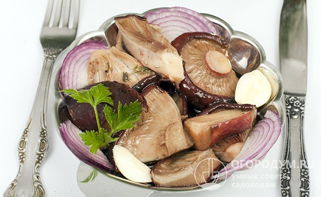 Хрустящие соленые грузди на зиму — рецепты приготовления холодным способом