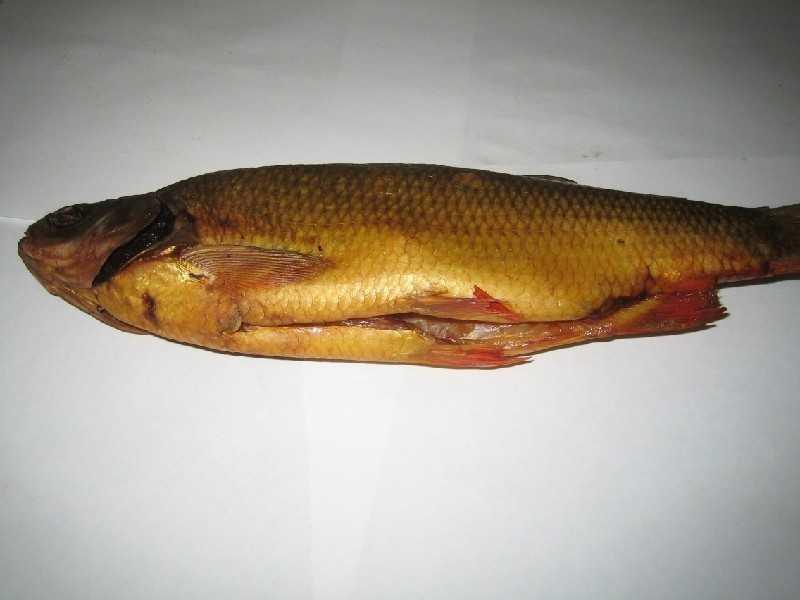 Рыба горячего копчения —польза и вред   польза и вред