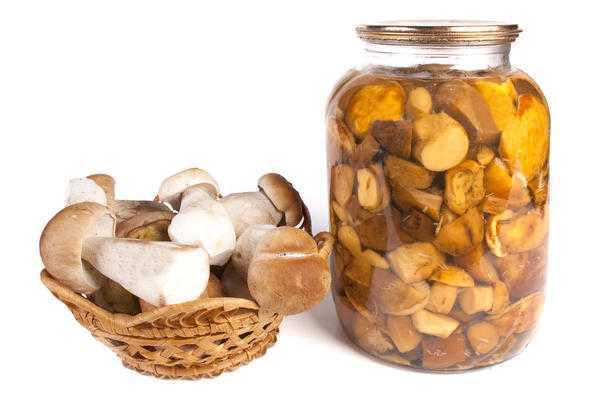 Посолить белянки на зиму обычный рецепт. соление грибов белянок. рецепт маринованных белянок