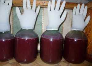 Вино из ревеня рецепт приготовления в домашних условиях