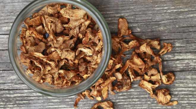 Как хранить сухие грибы в домашних условиях: полезные советы