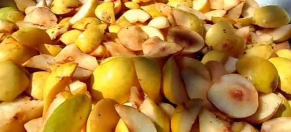 Рецепты и правила приготовления браги из яблок без дрожжей