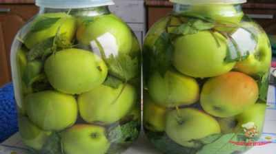 Моченые яблоки: 20 оригинальных рецептов - будет вкусно! - медиаплатформа миртесен