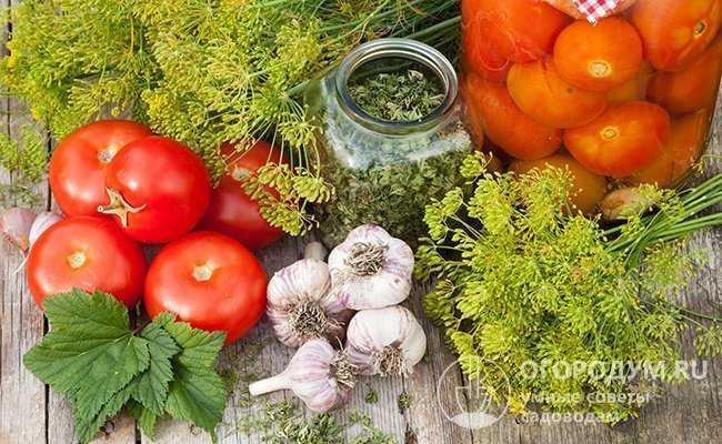 Заготовка солений на зиму: как сделать помидоры в банках, ведре, кастрюле и пакете