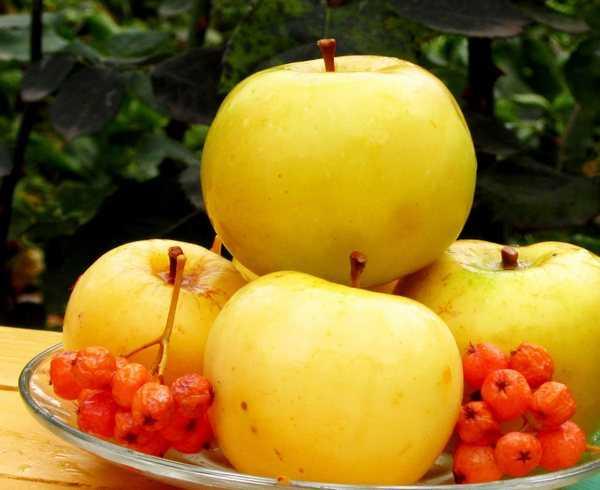 Моченые яблоки на зиму – в банках, бочках и ведрах