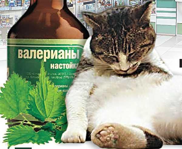 Спирт - 42 рецепта приготовления пошагово