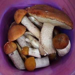 Как правильно замораживать грибы, овощи ифрукты назиму. советы экспертов