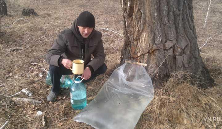 Как добывать и хранить берёзовый сок