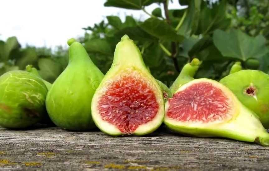 Инжир сушеный, польза и вред для организма, калорийность, фото