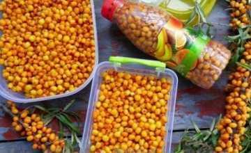 Правила и способы хранения ягод облепихи на зиму в домашних условиях