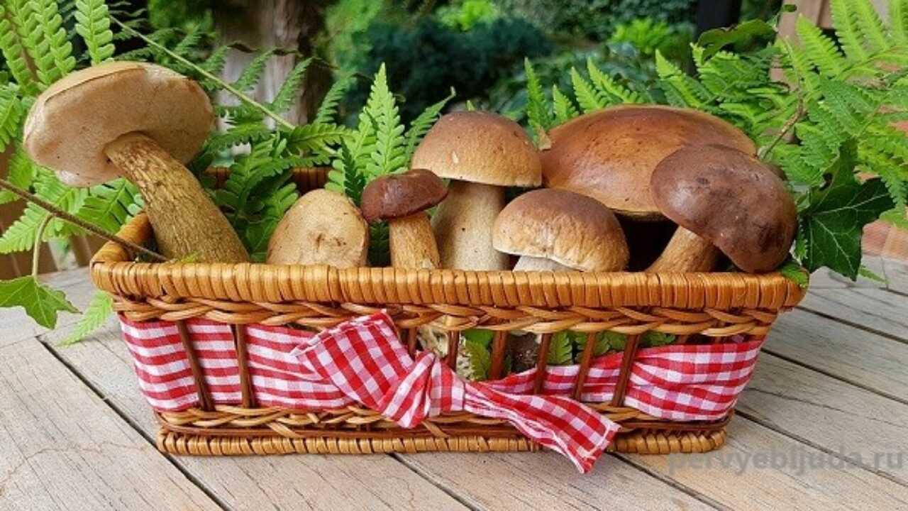 Вкусная засолка белых грибов в домашних условиях