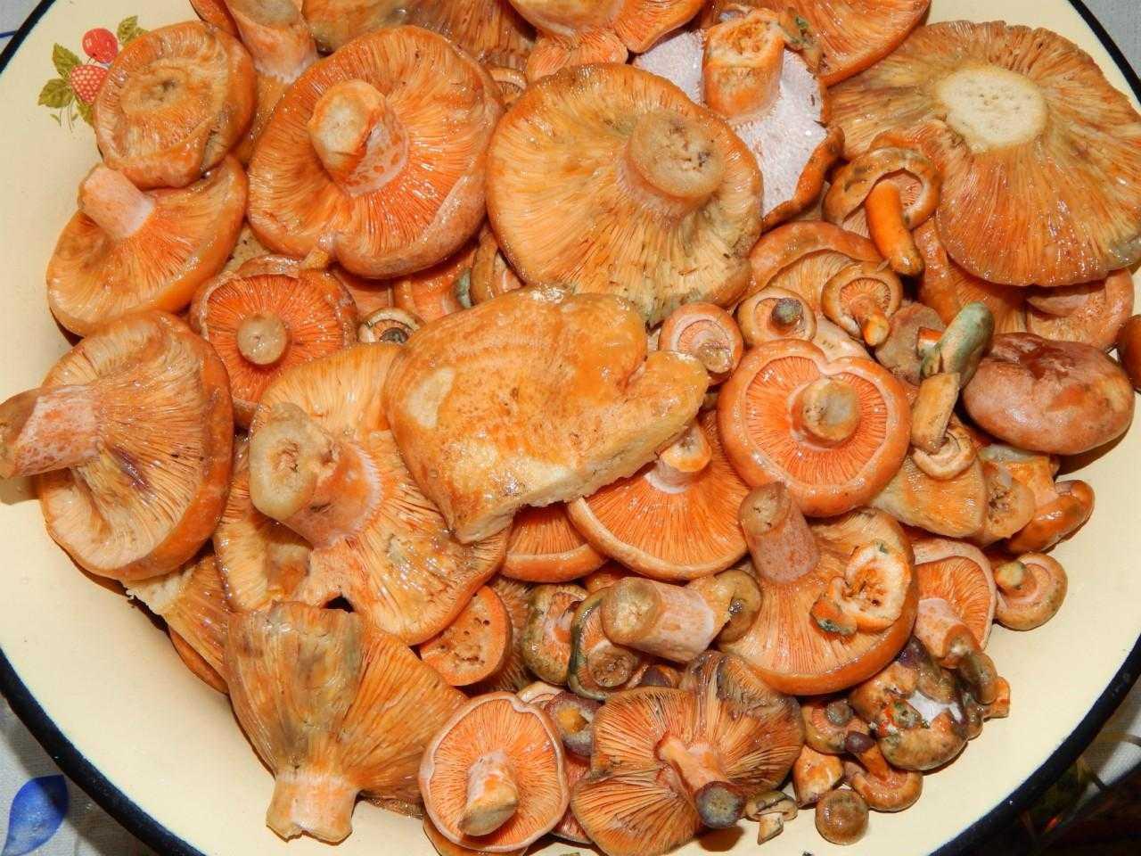 Как солить грибы в домашних условиях: рецепты