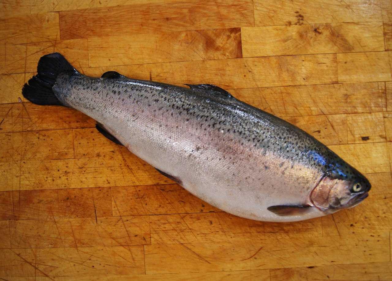 Копчение рыбы в домашних коптильнях