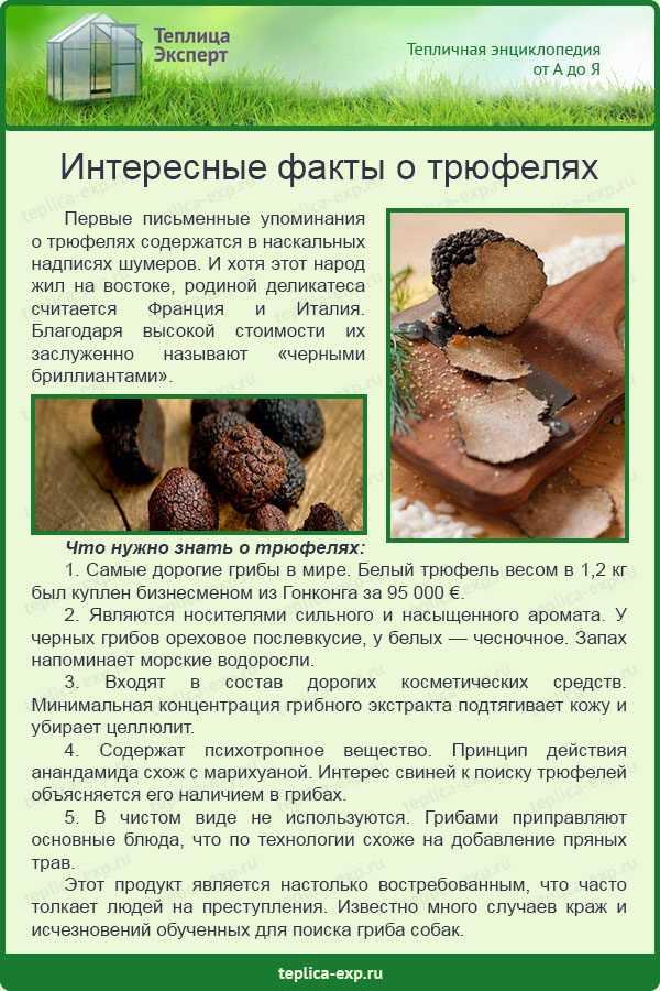 Как приготовить трюфельные конфеты по пошаговому рецепту с фото