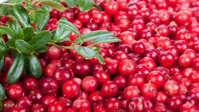 Брусника. вкусные и полезные рецепты заготовок на зиму