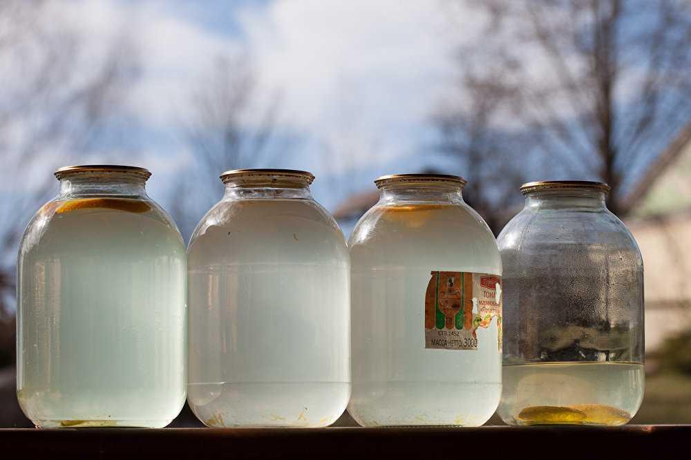 Когда собирать березовый сок и как правильно это делать