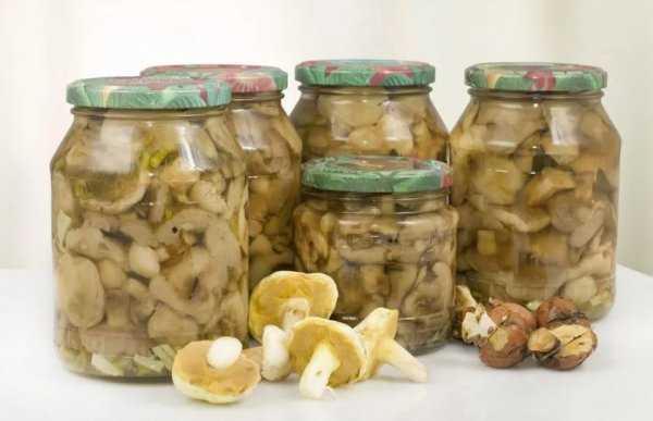 Как готовить грибы сыроежки - 10 рецептов приготовления