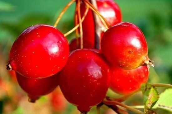 Варенье из боярышника с косточками – рецепт, польза и противопоказания