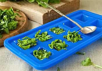Щавель: как заморозить свежий в камере в домашних условиях на зиму и правильно сохранить в пакетах, без кипячения, можно ли в холодильнике, что приготовить и рецепты
