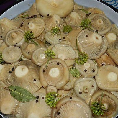 Как варить груздянку из замороженных грибов