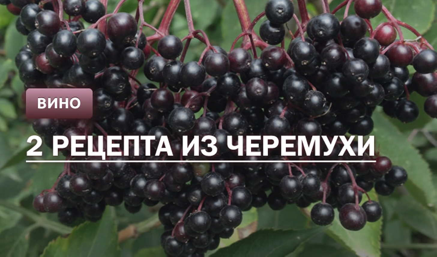 Вино из черемухи: оригинальные рецепты приготовления