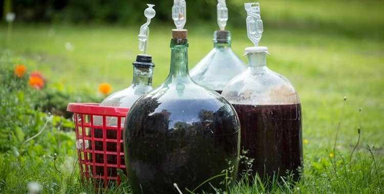Вино из красной смородины в домашних условиях: простой рецепт крепленого, сухого, столового вина