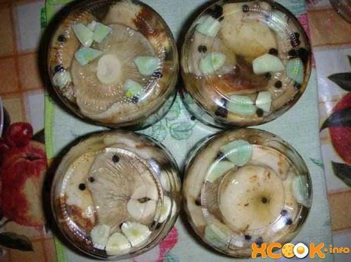 Засолка грибов белых груздей: горячим и холодным способом на зиму в домашних условиях в банки