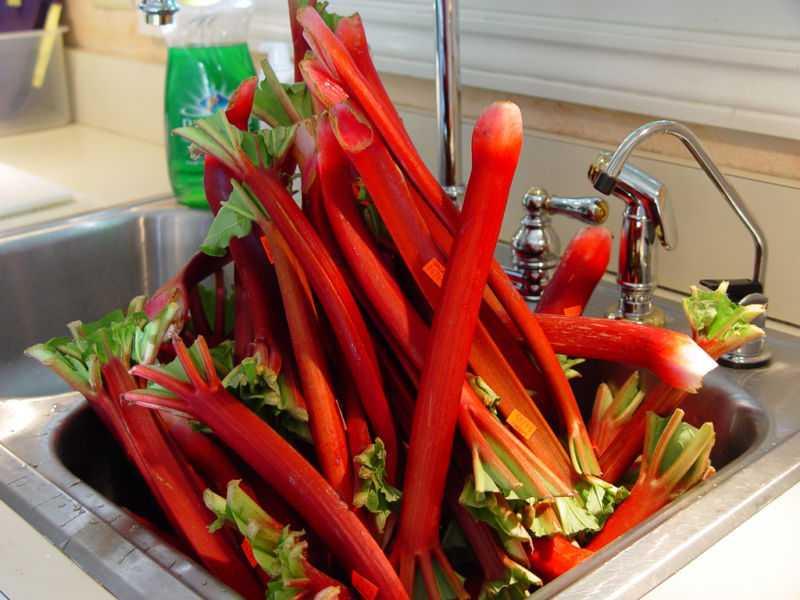 Варенье из ревеня: самый правильный рецепт приготовления на зиму